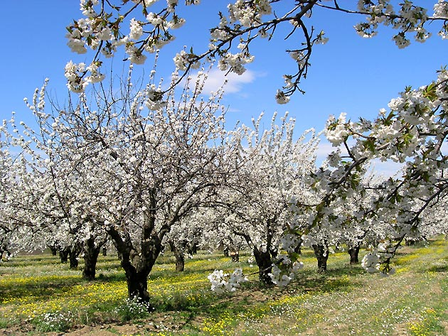 provence-centre-almond-trees-winter-2