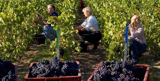 provence-centre-harvest