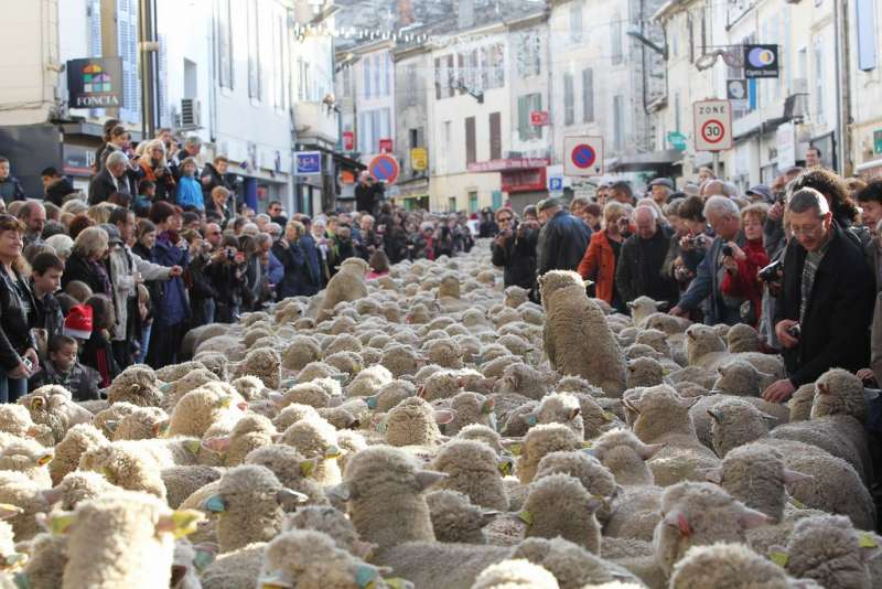 provence-centre-istres-shepherds-festival